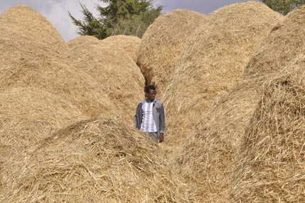 More haystacks